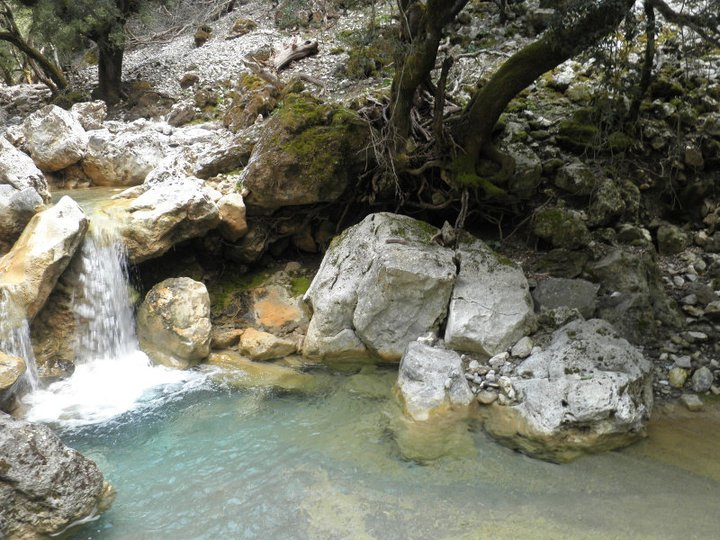 Δάσος του Ρούβα, Ηράκλειο Κρήτης